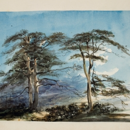 Grupo de pinos en el Guadarrama