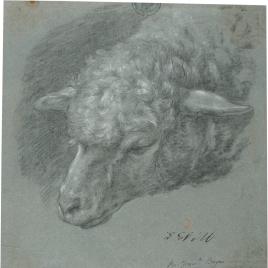 Cabeza de oveja