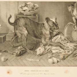 Perro con presa