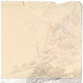 Estudio de paisaje (arbustos y matorrales)