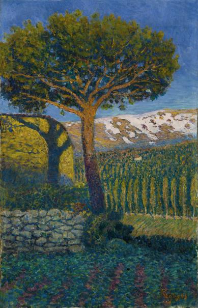 El pino de Béjar