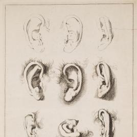 Estudios de orejas