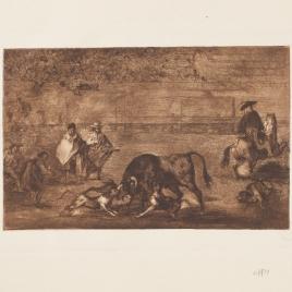Perros al toro