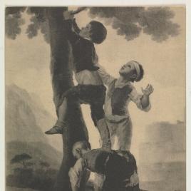 Muchachos trepando al árbol
