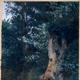 El tronco viejo