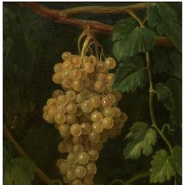 Un racimo de uvas