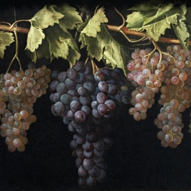 Still Life with four Bunches of Grapes