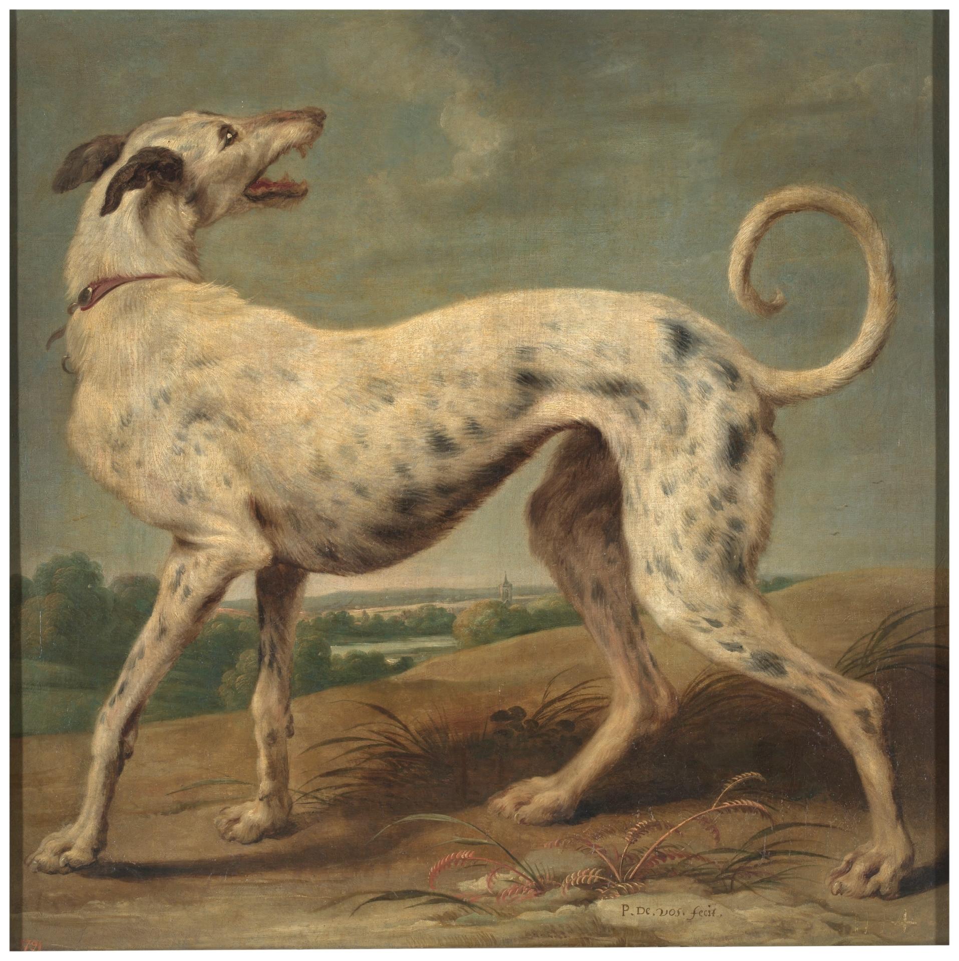 Un galgo blanco - Colección - Museo Nacional del Prado
