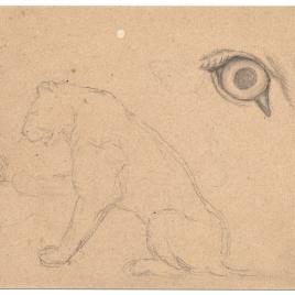 Estudio de figura de una leona. Estudio de ojo (Nuestra Señora de Fourvière, Lyon)