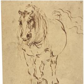 Estudio de caballo