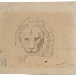 Estudio para la cabeza de un león (Nuestra Señora de Fourvière, Lyon)