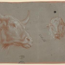 Cabeza de buey y de oveja