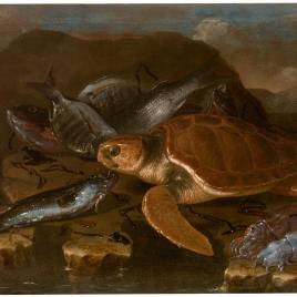 Bodegón de peces y tortuga