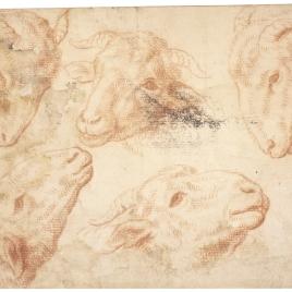 Cinco estudios de cabeza de carnero