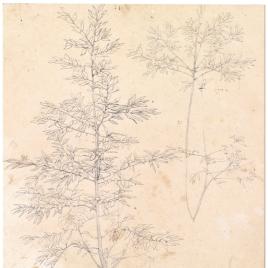 Estudio de ramas de árboles