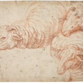 Tres estudios de ovejas