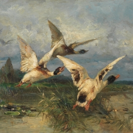 En busca de otro nido