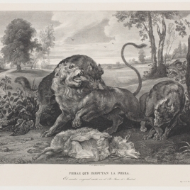 Un león y tres lobos