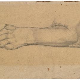 Estudio de pata delantera de un león (Nuestra Señora de Fourvière, Lyon)