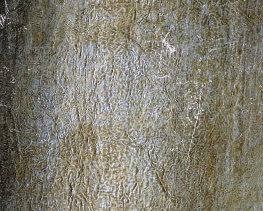 Fig.1. Burned texture resulting from an old restoration