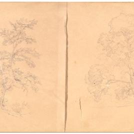 Estudio de tres árboles