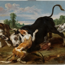 A Bull torn apart by Dogs