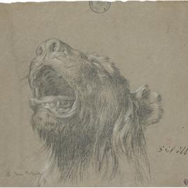 Cabeza de leona