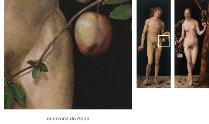Manzana en la mano